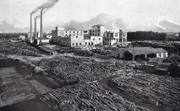 Corsico, lo stabilimento e il deposito legnami (1925)